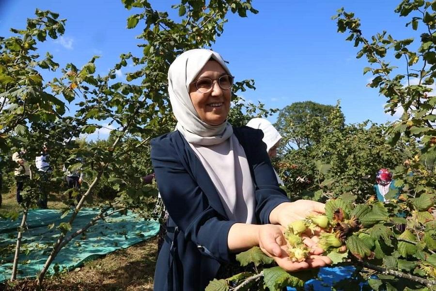 Radiye Sezer Katırcıoğlu,Kandıra'da Mevsimlik Tarım İşçileriyle Fındık Topladı