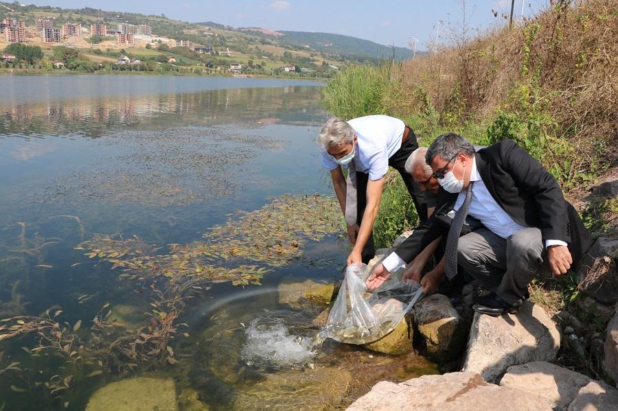 Kocaeli İl Tarım ve Orman Müdürlüğümüz ekiplerince İlimizdeki Göletlere toplam 175.000 adet yavru sazan balığı bırakılmıştır.